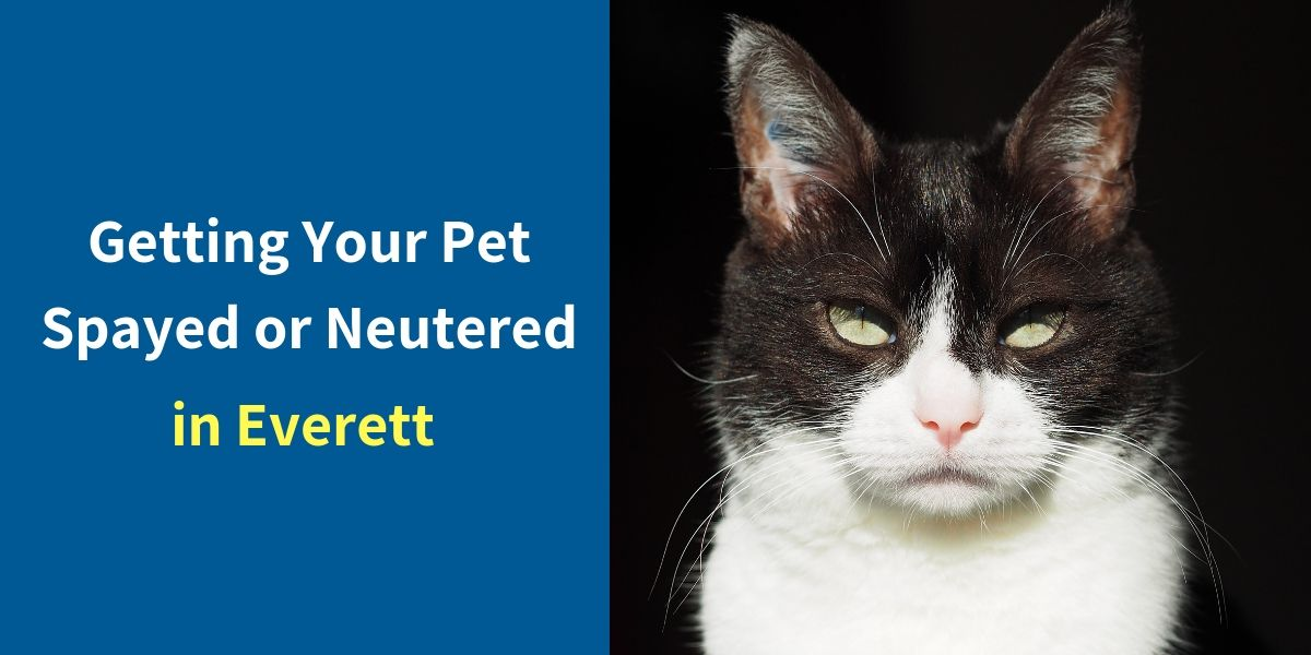 Spay and Neuter in Everett