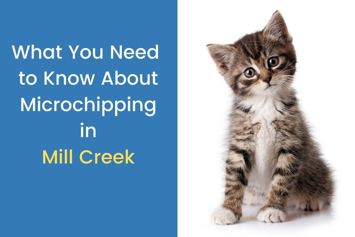 What-You-Need-to-Know-About-Microchipping-in-Mill-Creek