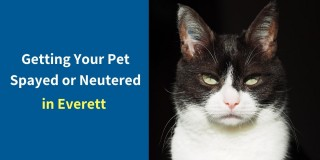 Getting-Your-Pet-Spayed-or-Neutered-1
