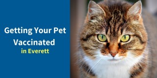 Getting-Your-Pet-Vaccinated-in-Everett