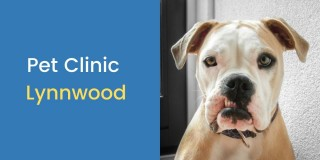 Pet-Clinic-Lynnwood