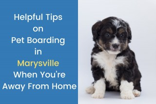 Helpful-Tips-on-Pet-Boarding-in-Marysville-When-Youre-Away-From-Home-2